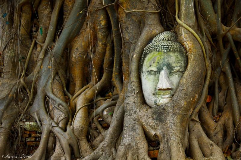 cropped-boudha_arbre.jpg