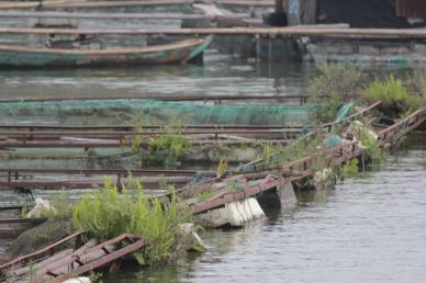 Détail de pisciculture